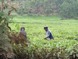 matawi - rwanda 2013-26