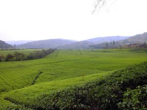 matawi - rwanda 2013-52
