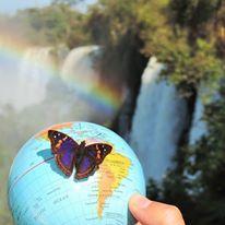 Una farfalla di posa su Henua alle cascate Iguazu' Argentina-Brasile